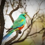 Adelaide Private Tours native birds wildlife